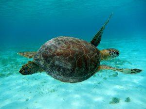 De nationale parken van Curacao